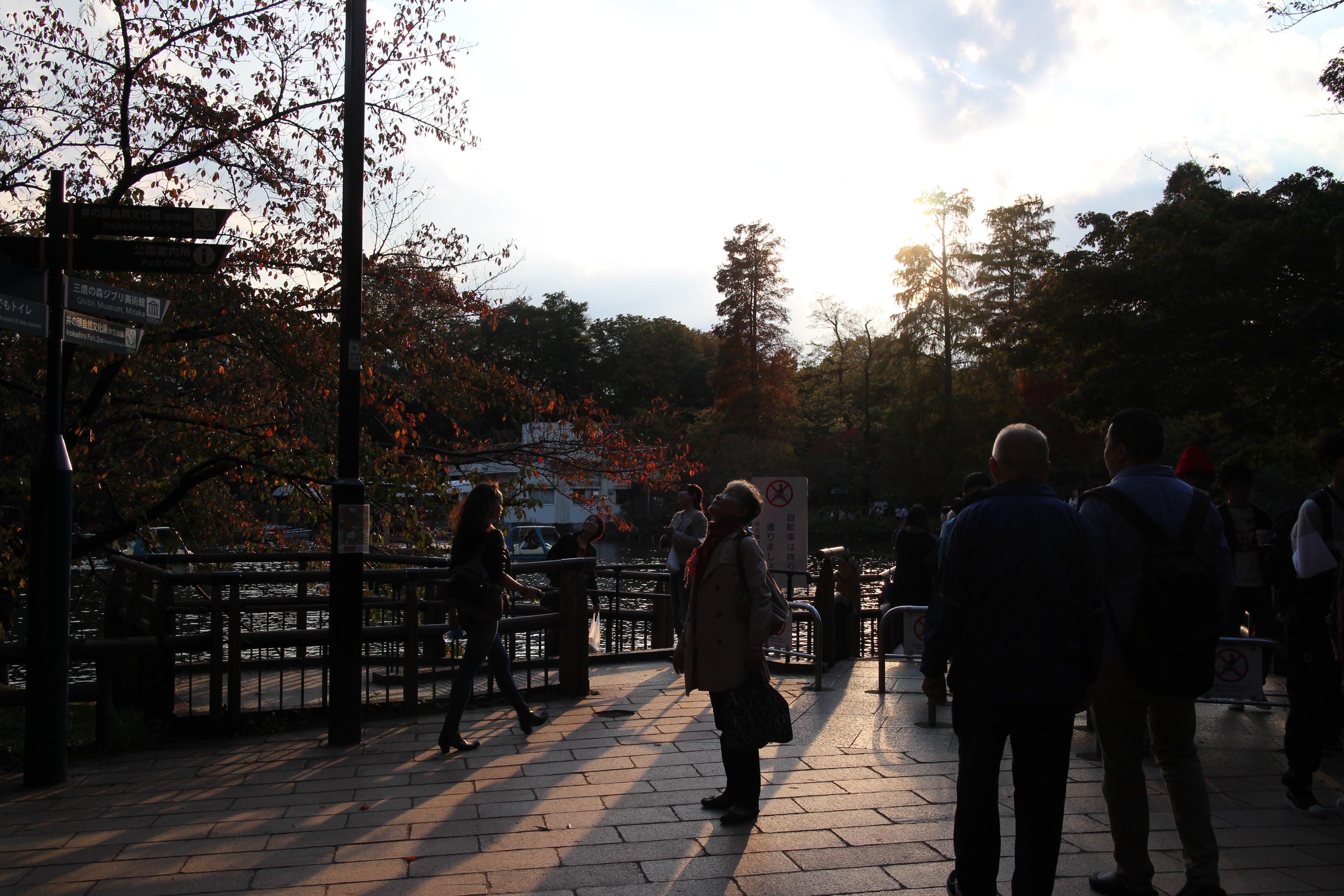 秋の陽はつるべ落と